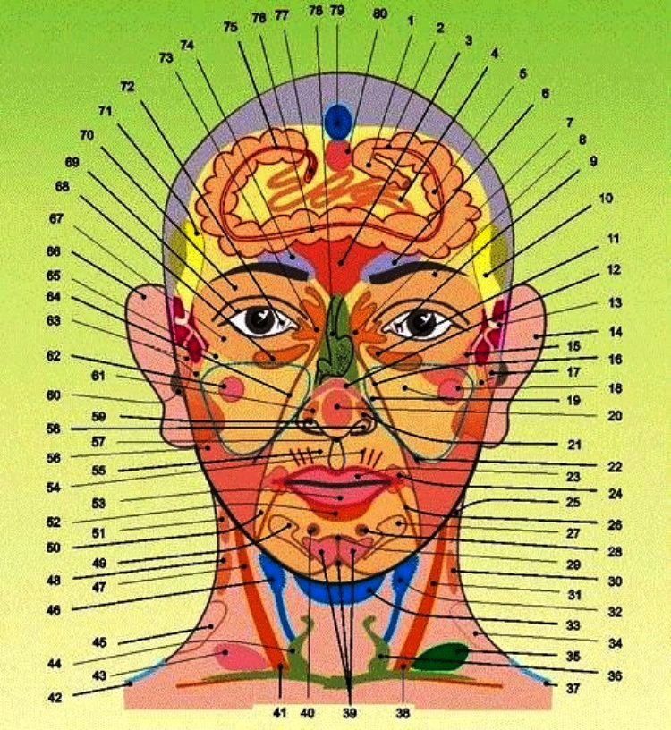 Зоны Захарьина-Геда на лице и шее