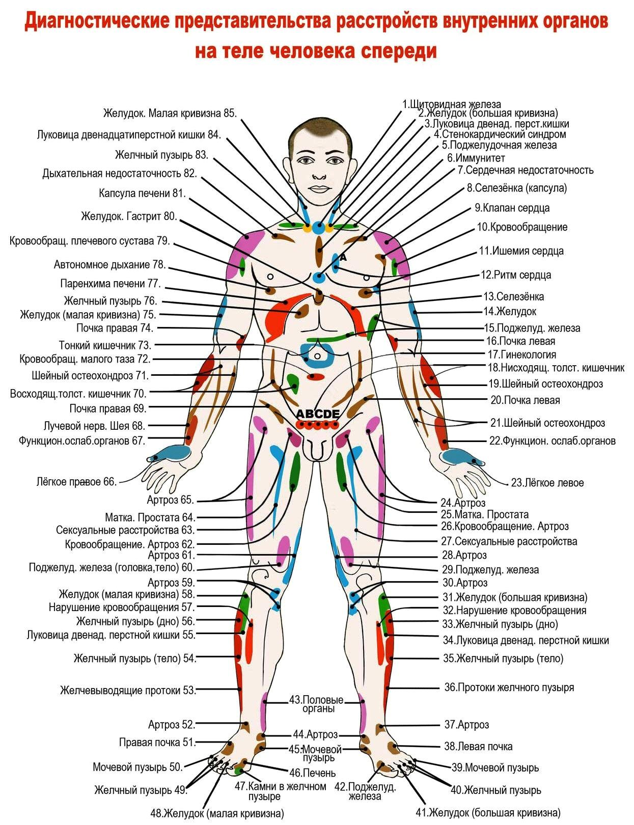 Диагностика по зонам Захарьина-Геда. Правила проведения