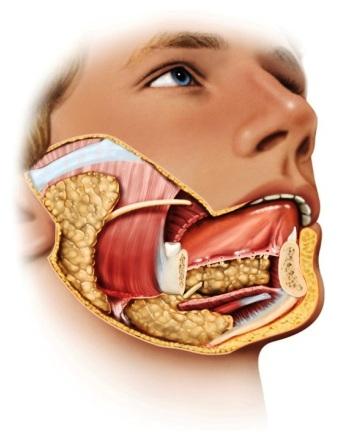 Лечение слюнных желез аппаратом Спинор